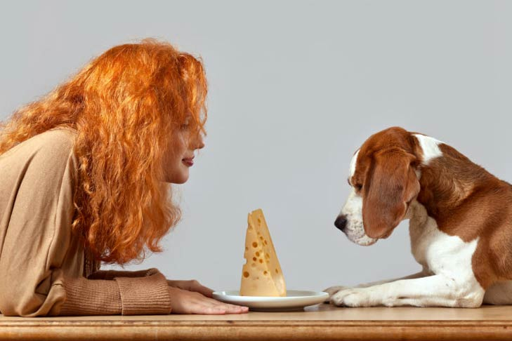 Beagle-Woman-and-Cheese